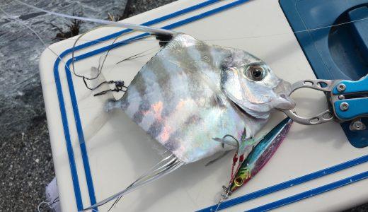 【ショアジギング】伊方の方で綺麗な魚が・・・