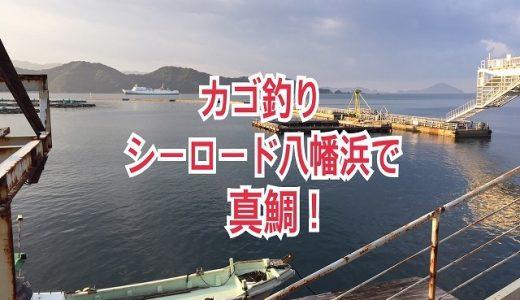 【カゴ釣り】シーロード八幡浜で真鯛!