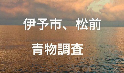 【ショアジギング】伊予市から松前青物調査!