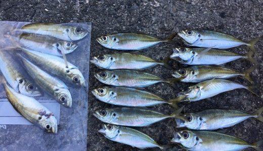 【アジング】佐田岬で朝まずめ狙いゼンゴ爆釣