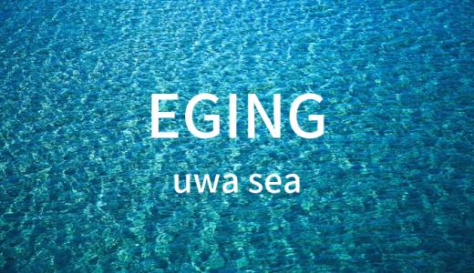 宇和海で秋のアオリイカ新子が釣れはじめてます