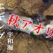 宇和海秋イカエギング意外な場所が熱かった!!