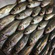 【アジング】伊方町の漁港で過去最高釣果!!!